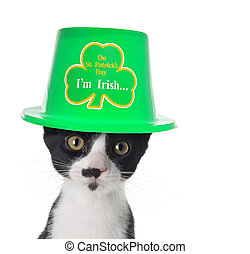 Im Irish - Cute black and white kitten wearing a St Patricks...