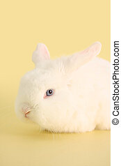 Bunny rabbit - Cute bunny rabbit on a pastel yellow...