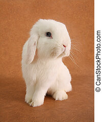 Bunny rabbit - White bunny rabbit portrait.