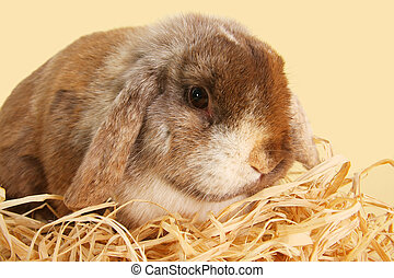Bunny rabbit on straw with pastel yellow background.