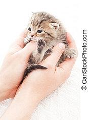 tabby kitten in hands