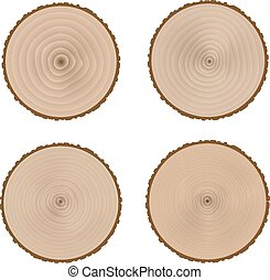 The transverse structure of the tree trunkStock Vector...