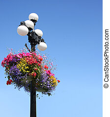 Summer flower baskets - Summer floral baskets hanging from a...