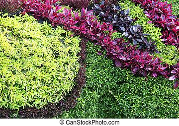 Colorful plants background. - A decorative wall arrangement...