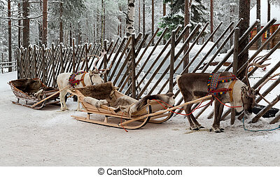 Reindeers in harness - Two Christmas reindeer sleigh in...