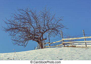 Leafless tree and rustic fence - Old solitary leafless tree...