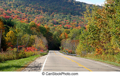 High Way - High way through woods in Allegheny national...