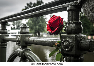 Rose - Red withered rose on a bridge in Prague