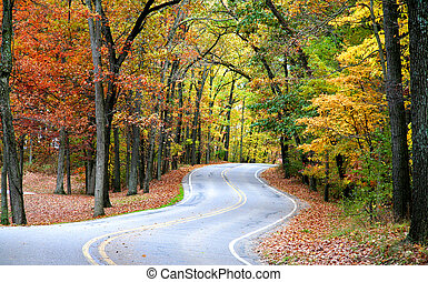 Autumn Drive - Scenic winding road through colorful trees...