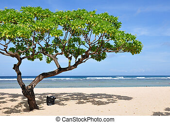 Nusa Dua Beach Tree - Tree on Nusa Dua beach, Bali,...