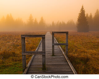 Wooden path leads to the forest, foggy day
