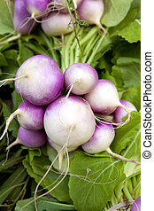 Turnips - Bunch of turnips on a market stall