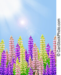 purple yellow and pink sunny lupin - yellow pink and purple...