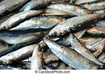sardine,