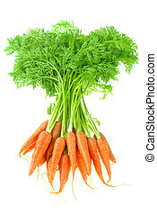 carrot - bunch of carrot