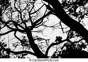 tree branch silhouette - branches of a tree against white...