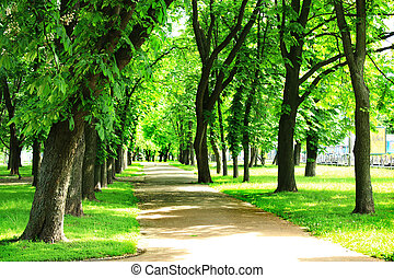 nice path in the beautiful park with many green trees