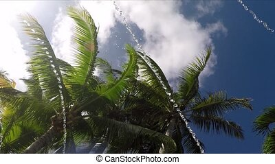 Looking up at palm trees lazy river - Playing in water at...