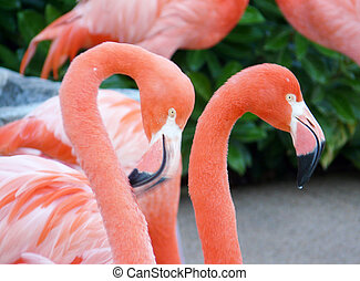 Flamingos in Orlando - Two flamingos heads