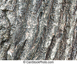 Bark of Elm Seamless Tileable Texture , background