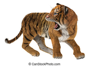 Roaring Tiger - 3D digital render of a big cat tiger looking...
