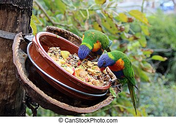Bright Parrots eat from feeders feed - Large Bright Parrots...