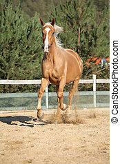 Amazing palomino warmblood running - Amazing palomino czech...