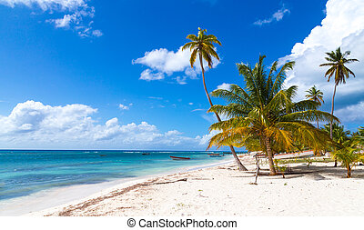 Beach in Saona Dominican Republic - Beach in Saona Dominican...
