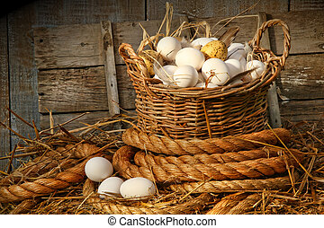 Basket of eggs on straw in the chicken coop
