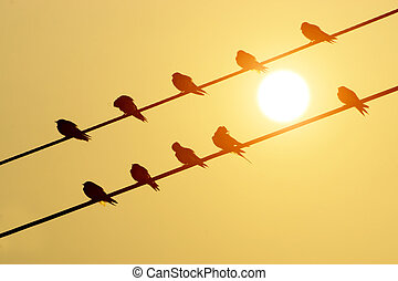 silhouettes of common swallows on power lines.