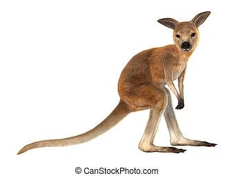 Joey - 3D digital render of a red baby kangaroo isolated on...