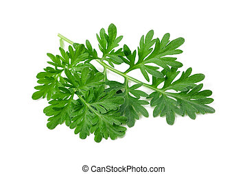 sagebrush - Wormwood (absinthium) Isolated on White...