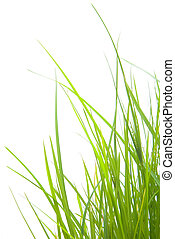 Grass - Green Grasses