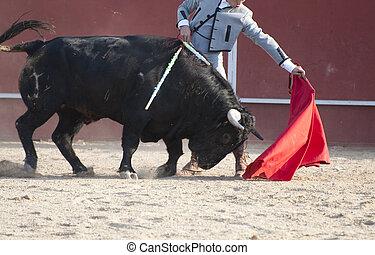 lucha, toro