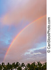 rainbow over the tropical forest