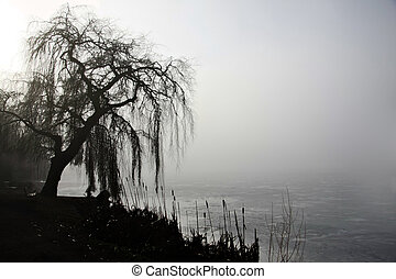 Weeping willow by a pond.