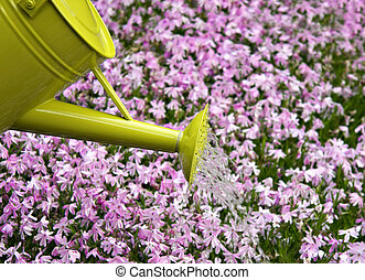 Watering can watering the flower bed.
