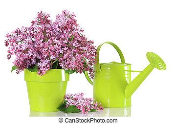 Lilacs  - Spring lilac arrangement.