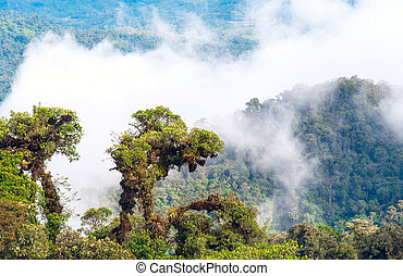 tropical,  rainforest,  andes,  Amazon,  Ecuador, vista