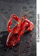 Red crawfish with water drops