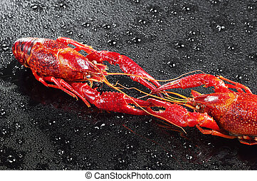Two crawfish with water drops - Two red crawfish with water...