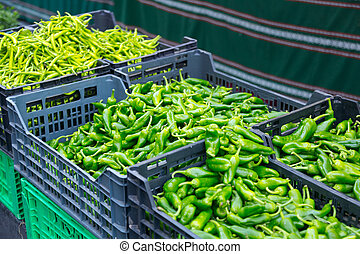 Harvest of green peppers