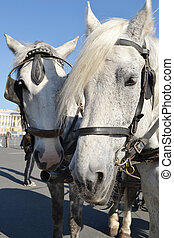 Two horses.