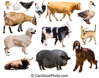 Set of dog, pig and other farm animals Isolated over white...