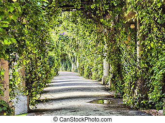 archway in the park at summer. - Green archway in the park...