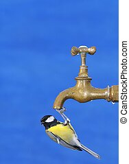 Bird drinking water - Bird perched on a faucet drinking...