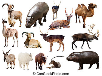 hippo and other Artiodactyla mammal animals over white...