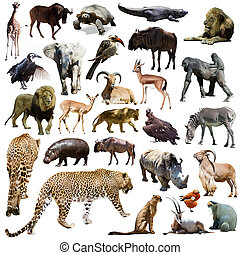 Set of leopard and other African animals over white