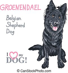 dog Belgian Shepherd Dog, Groenendael breed - Vector dog...