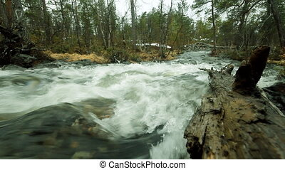 Taiga flowing spring river - Rapid river in forest, rifts It...